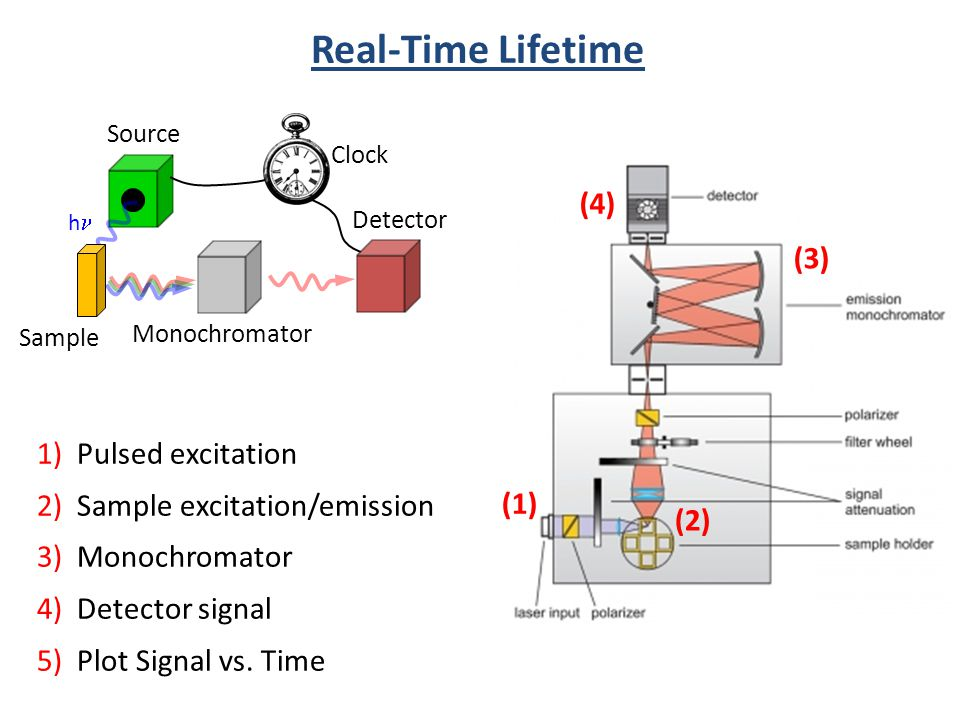 Source h Sample Monochromator Detector Clock (1) (2) (3) (4) 1) Pulsed excitation 2) Sample excitation/emission 3) Monochromator 4) Detector signal 5)