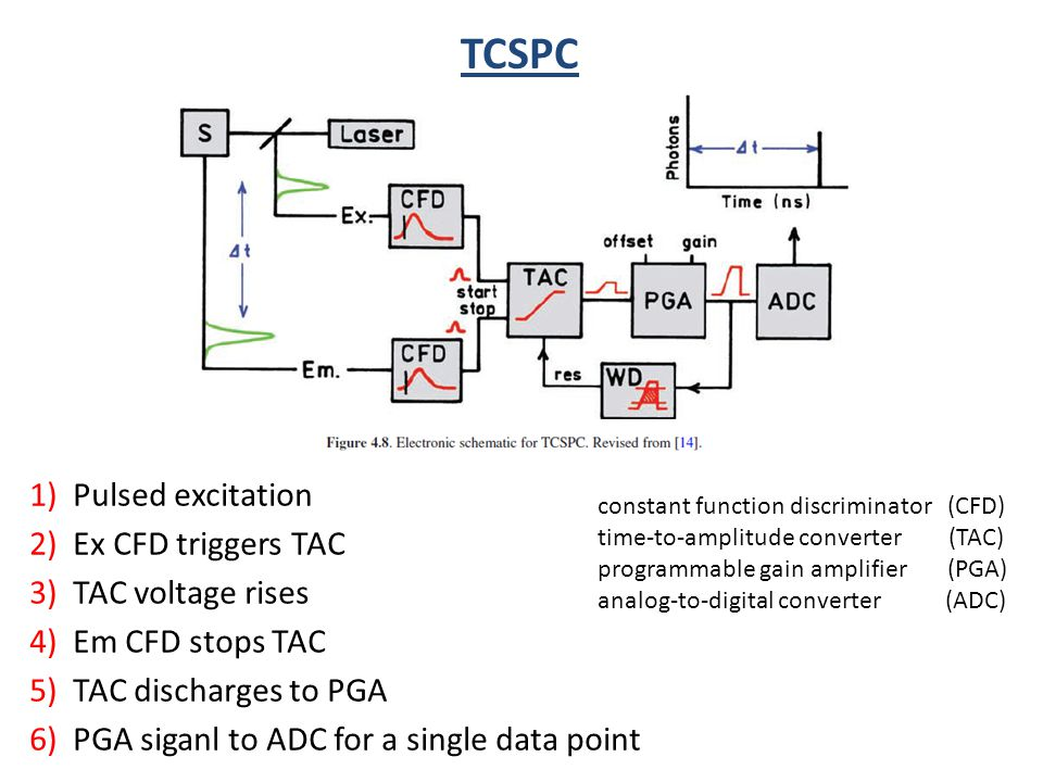 constant function discriminator (CFD) time-to-amplitude converter (TAC) programmable gain amplifier (PGA) analog-to-digital converter (ADC) TCSPC 1) P