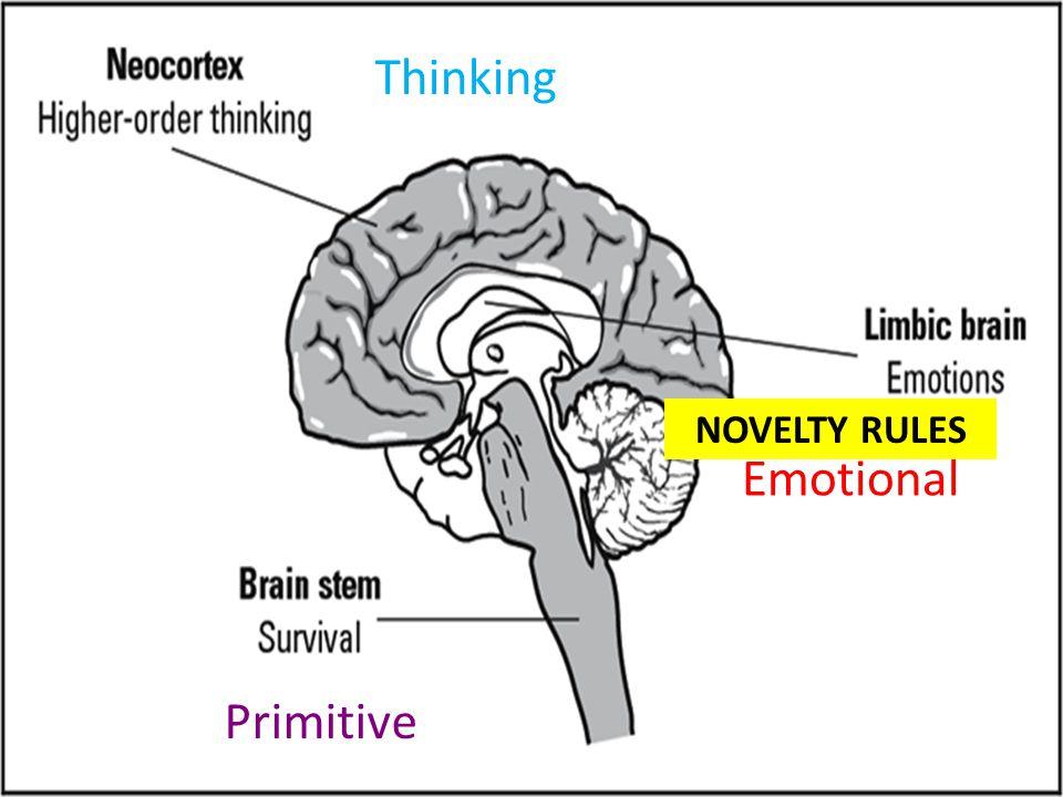 Primitive Emotional Thinking NOVELTY RULES