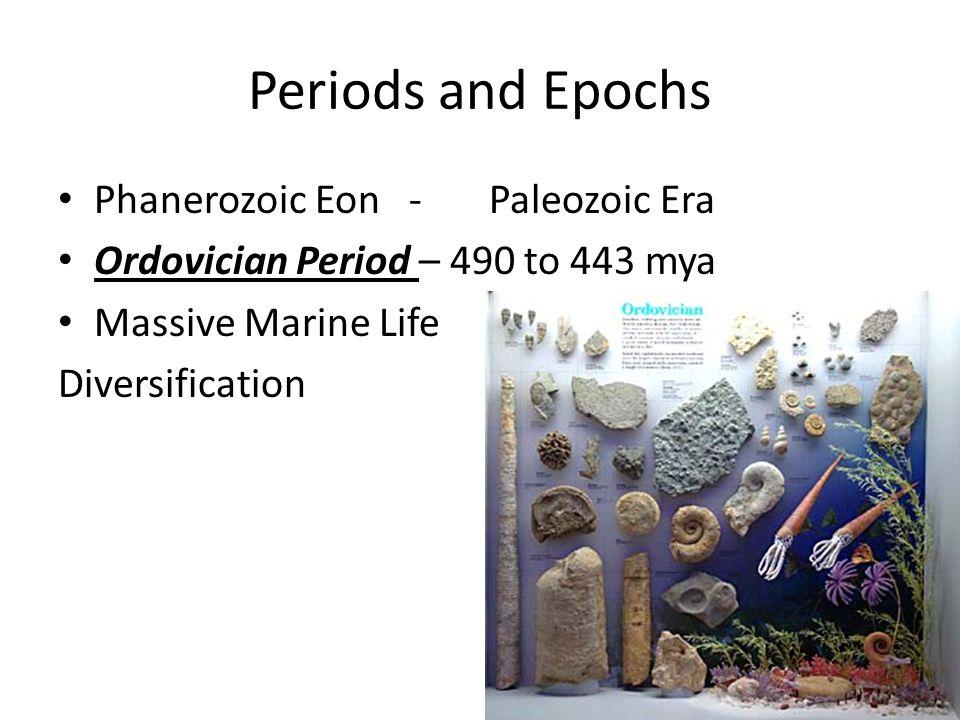Periods and Epochs Phanerozoic Eon - Paleozoic Era Ordovician Period – 490 to 443 mya Massive Marine Life Diversification