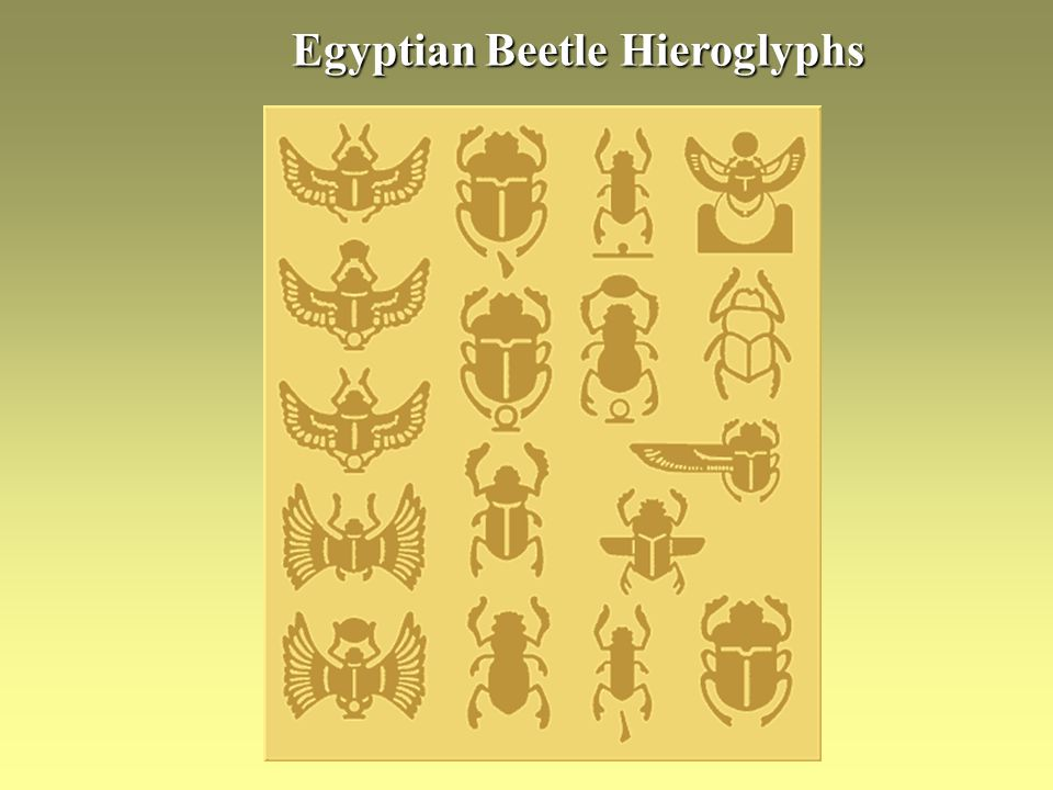 Egyptian Beetle Hieroglyphs