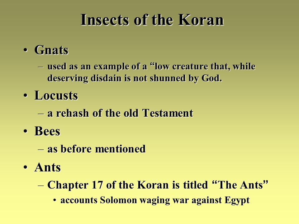 Insects of the Koran GnatsGnats –used as an example of a low creature that, while deserving disdain is not shunned by God.