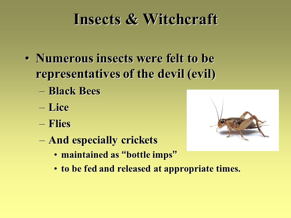 Insects & Witchcraft Numerous insects were felt to be representatives of the devil (evil)Numerous insects were felt to be representatives of the devil (evil) –Black Bees –Lice –Flies –And especially crickets maintained as bottle impsmaintained as bottle imps to be fed and released at appropriate times.to be fed and released at appropriate times.
