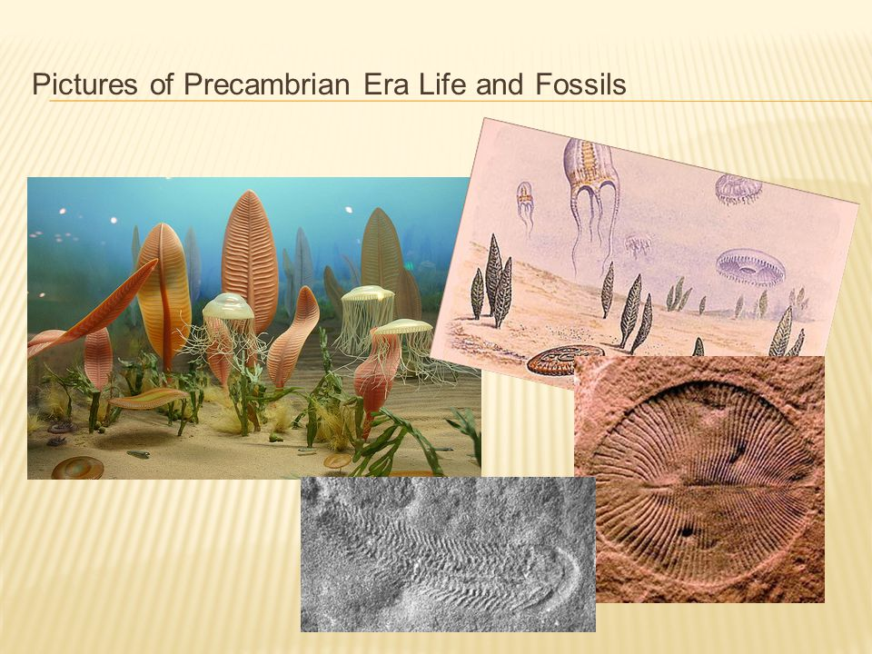 Pictures of Precambrian Era Life and Fossils