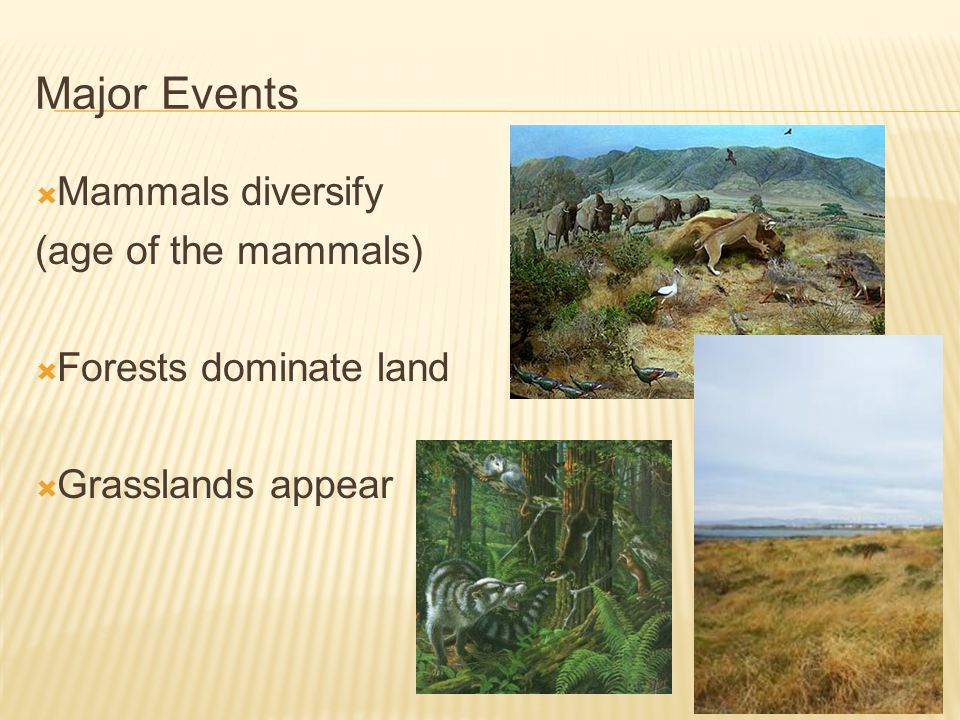 Major Events Mammals diversify (age of the mammals) Forests dominate land Grasslands appear