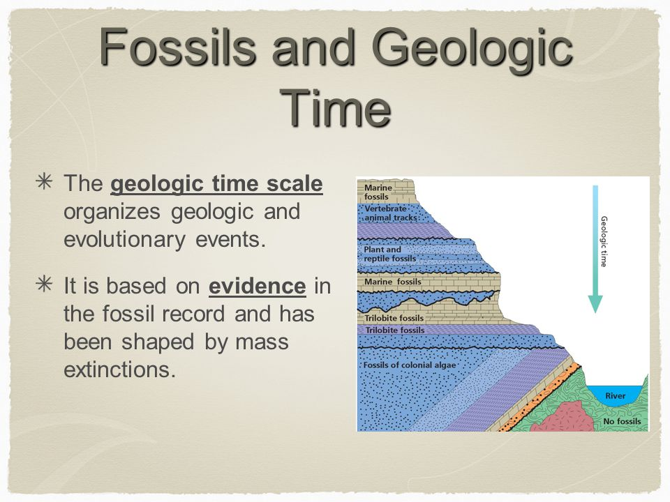 Fossils and Geologic Time The geologic time scale organizes geologic and evolutionary events. It is based on evidence in the fossil record and has bee