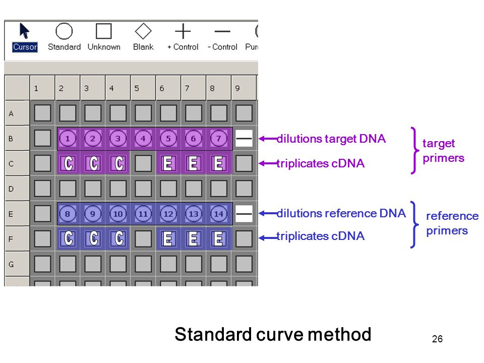 26 dilutions target DNA dilutions reference DNA target primers reference primers triplicates cDNA Standard curve method