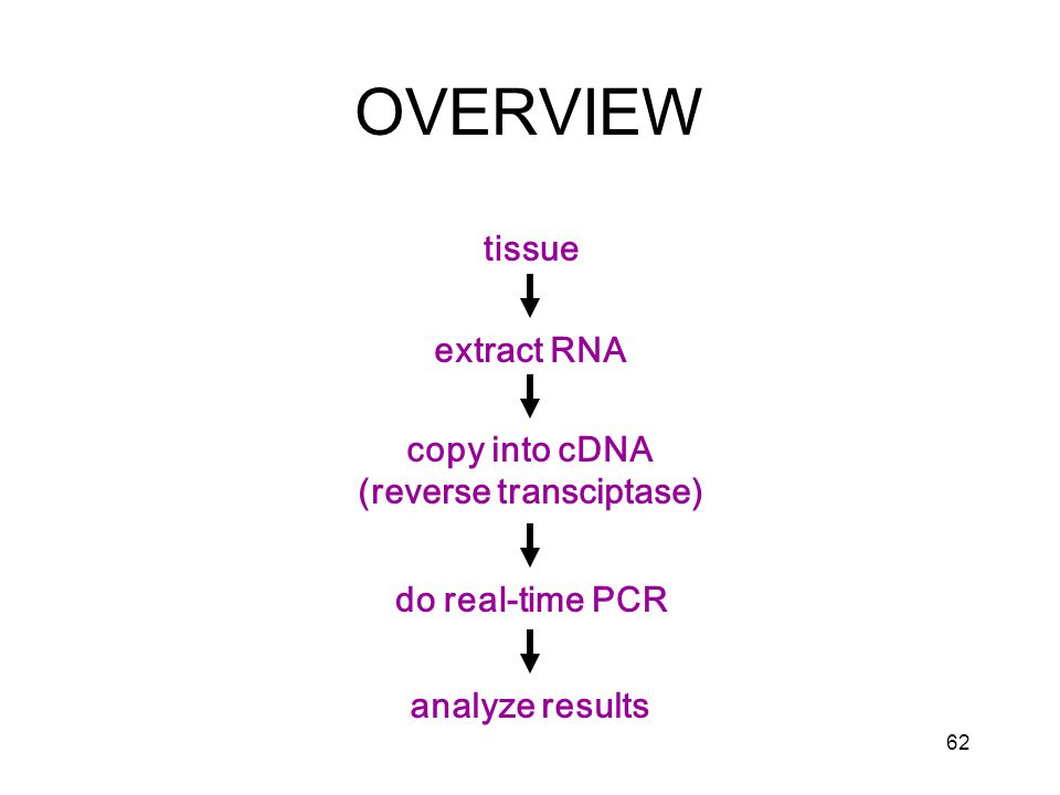 62 OVERVIEW tissue extract RNA copy into cDNA (reverse transciptase) do real-time PCR analyze results