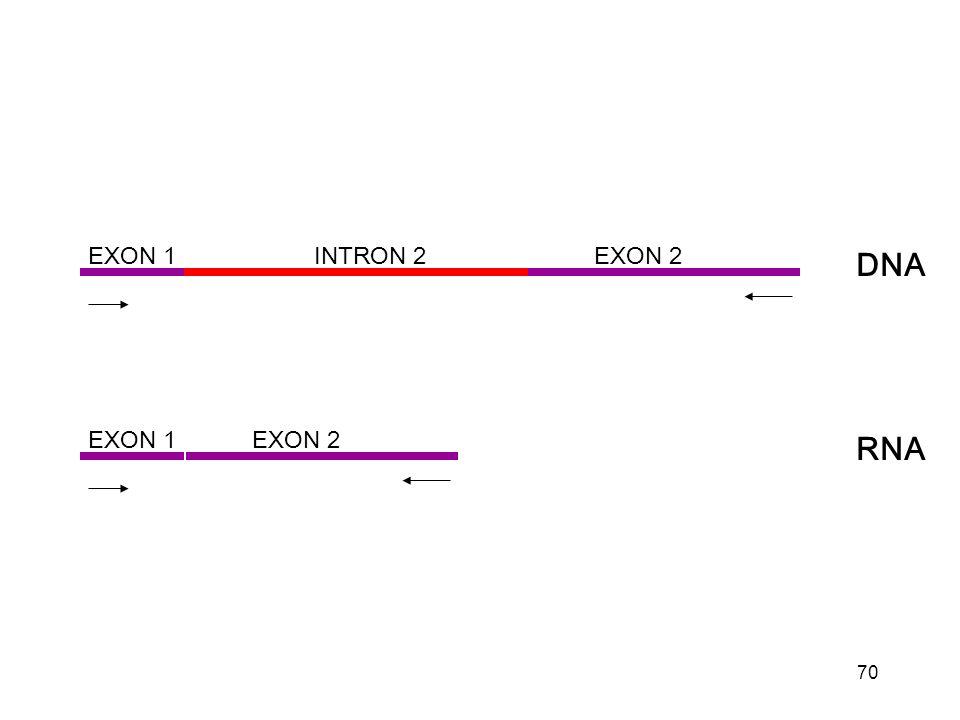 70 EXON 1 EXON 2INTRON 2 DNA EXON 1 EXON 2 RNA