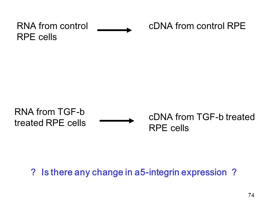 74 RNA from control RPE cells RNA from TGF-b treated RPE cells cDNA from control RPE cDNA from TGF-b treated RPE cells .