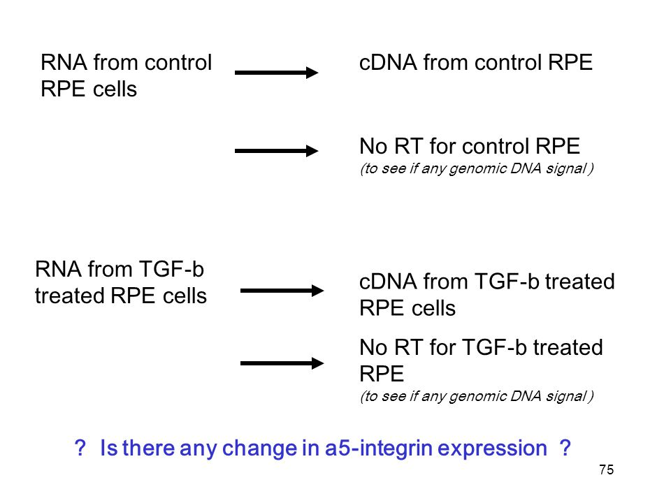 75 RNA from control RPE cells RNA from TGF-b treated RPE cells cDNA from control RPE cDNA from TGF-b treated RPE cells .