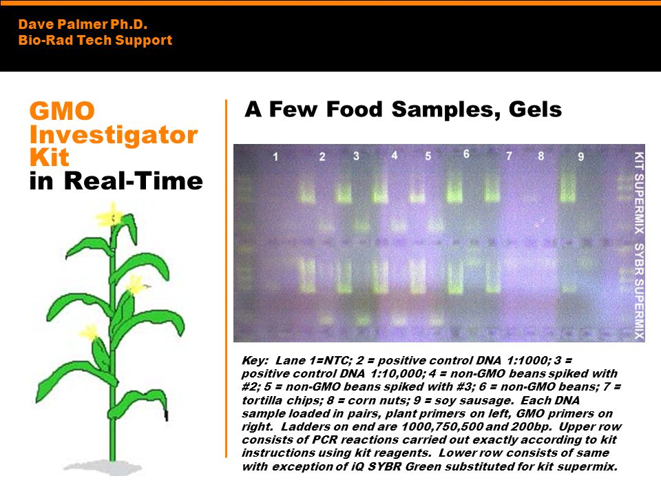 Dave Palmer Ph.D. Bio-Rad Tech Support GMO Investigator Kit in Real-Time Key: Lane 1=NTC; 2 = positive control DNA 1:1000; 3 = positive control DNA 1: