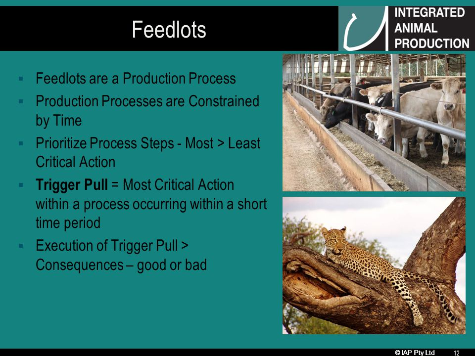 © IAP Pty Ltd 12 Feedlots Feedlots are a Production Process Production Processes are Constrained by Time Prioritize Process Steps - Most > Least Criti