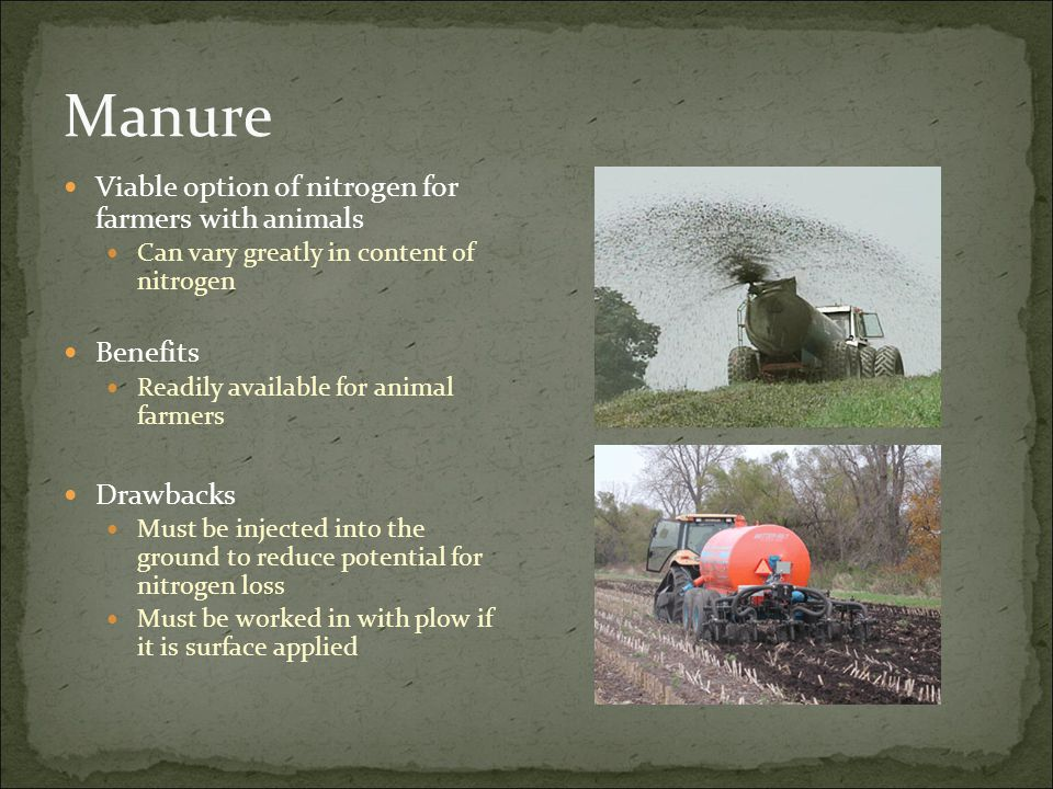 Manure Viable option of nitrogen for farmers with animals Can vary greatly in content of nitrogen Benefits Readily available for animal farmers Drawba