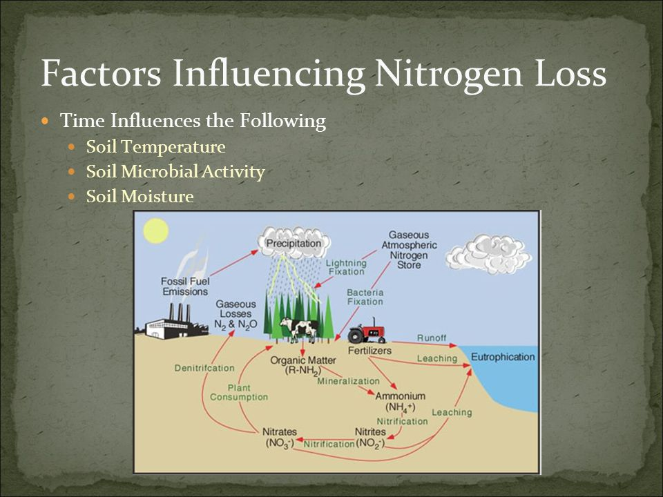 Factors Cont Soil Temperature As soil temperatures rise so does the rate of nitrogen loss Nitrification and Denitrification increase with temperature This increases potential for run-off and leaching Soil Microbial Activity As soil temperatures rise so does microbial activity This increase in microbial activity impacts the rate of nitrification and denitrification Soil Moisture Nitrification process prefers unsaturated soil Denitrification process prefers saturated soil General rule of thumb: If soil temperature are 60°F for three weeks or more it is safe to assume 50% of nitrogen applied is in nitrate form