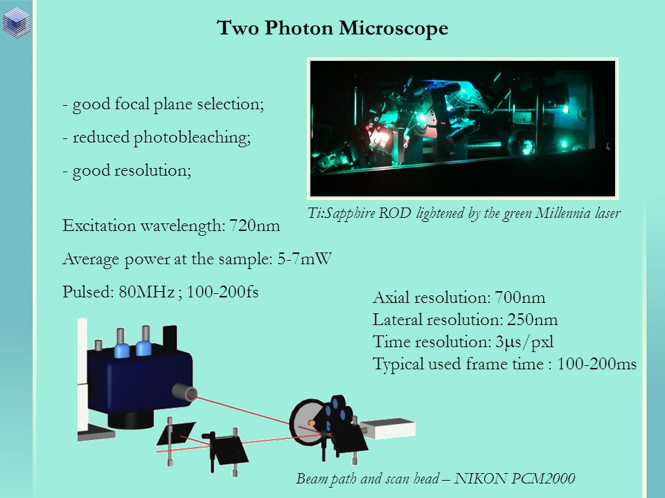 Two Photon Microscope - good focal plane selection; - reduced photobleaching; - good resolution; Ti:Sapphire ROD lightened by the green Millennia laser Excitation wavelength: 720nm Average power at the sample: 5-7mW Pulsed: 80MHz ; 100-200fs Axial resolution: 700nm Lateral resolution: 250nm Time resolution: 3 s/pxl Typical used frame time : 100-200ms Beam path and scan head – NIKON PCM2000