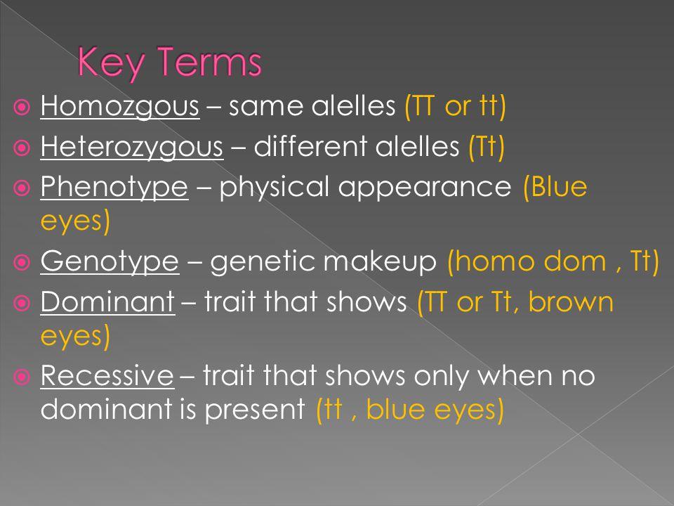 Homozgous – same alelles (TT or tt) Heterozygous – different alelles (Tt) Phenotype – physical appearance (Blue eyes) Genotype – genetic makeup (homo