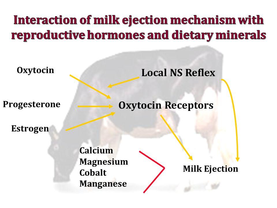 Milk Ejection Oxytocin Receptors Oxytocin Local NS Reflex Progesterone Estrogen Calcium Magnesium Cobalt Manganese
