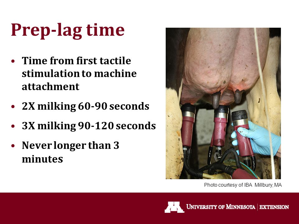 Prep-lag time Time from first tactile stimulation to machine attachment 2X milking 60-90 seconds 3X milking 90-120 seconds Never longer than 3 minute