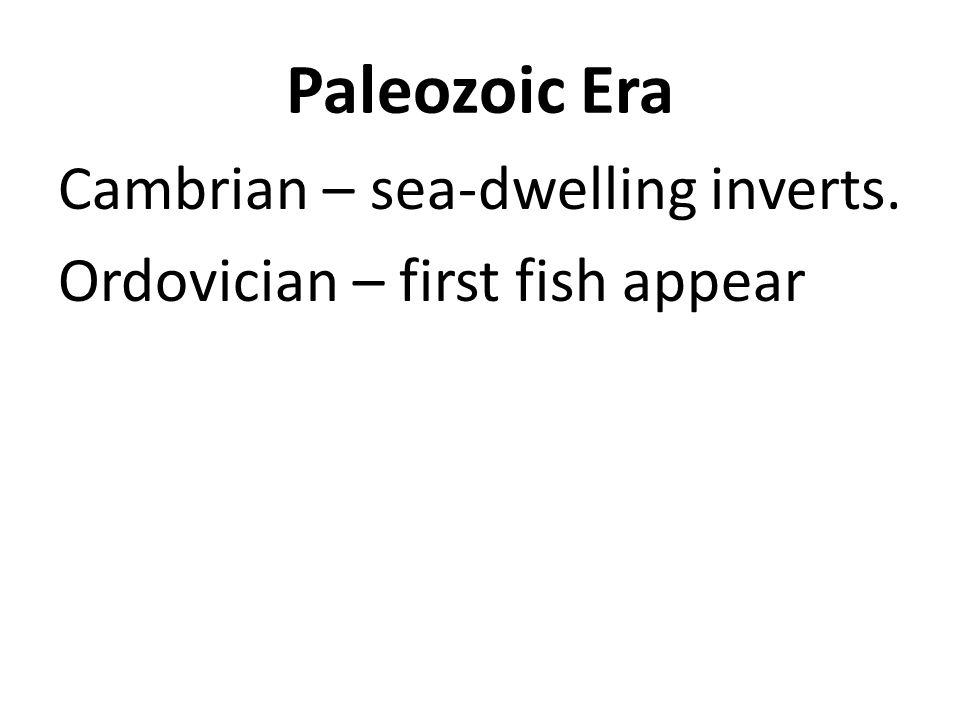 Paleozoic Era Cambrian – sea-dwelling inverts.