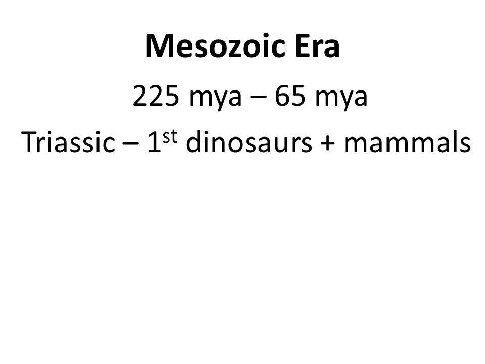 Mesozoic Era 225 mya – 65 mya