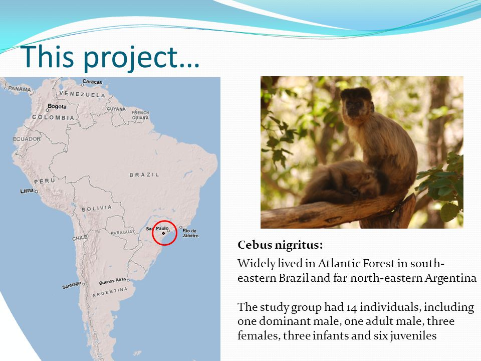 This project… Cebus nigritus: Widely lived in Atlantic Forest in south- eastern Brazil and far north-eastern Argentina The study group had 14 individuals, including one dominant male, one adult male, three females, three infants and six juveniles