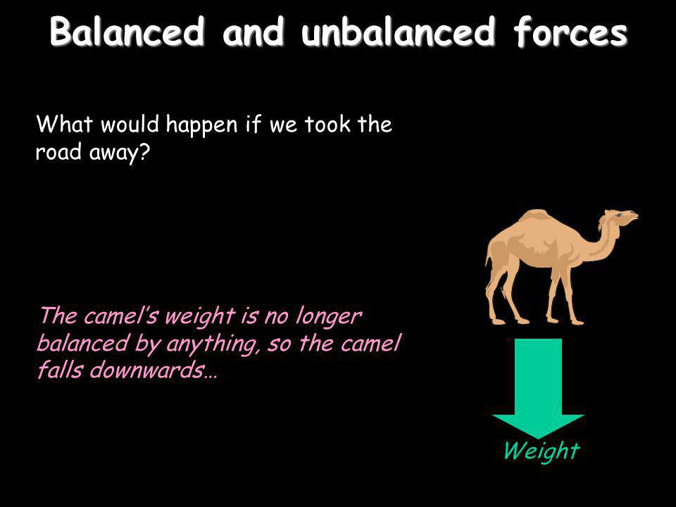 Balanced and unbalanced forces What would happen if we took the road away? The camels weight is no longer balanced by anything, so the camel falls dow