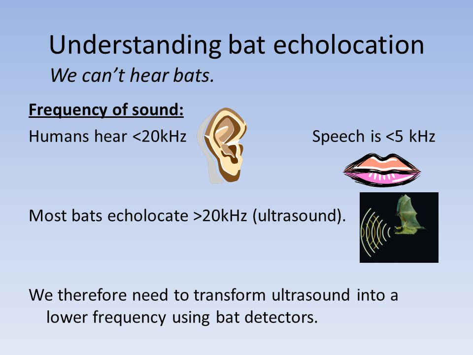 Understanding bat echolocation We cant hear bats. Frequency of sound: Humans hear <20kHz Speech is <5 kHz Most bats echolocate >20kHz (ultrasound). We