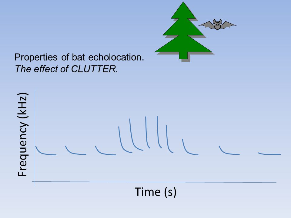 Frequency (kHz) Time (s) Properties of bat echolocation. The effect of CLUTTER.