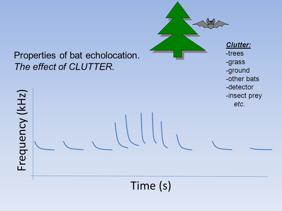Frequency (kHz) Time (s) Properties of bat echolocation. The effect of CLUTTER. Clutter: -trees -grass -ground -other bats -detector -insect prey etc.