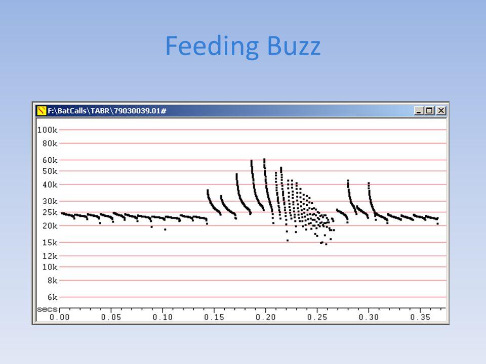 Feeding Buzz