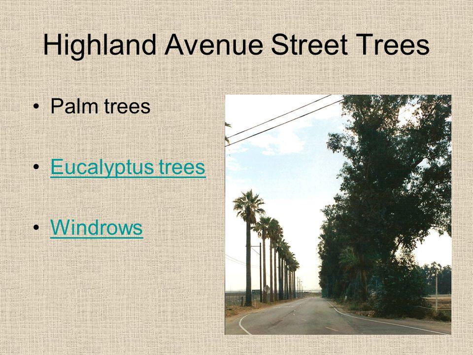 Highland Avenue Street Trees Palm trees Eucalyptus trees Windrows