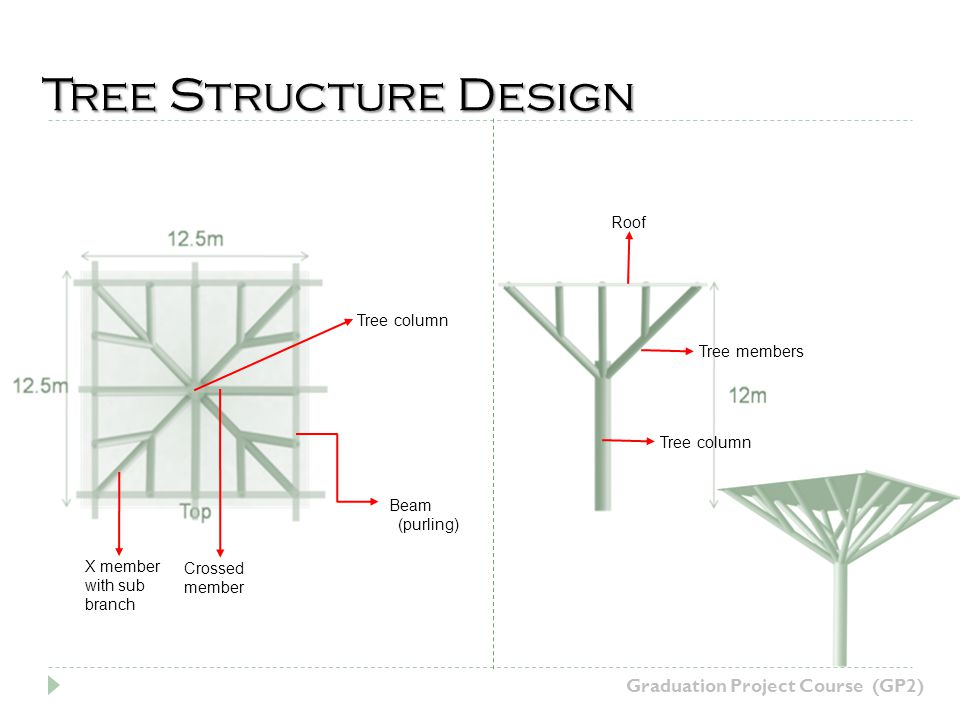 Tree Structure Design X member with sub branch Crossed member Beam (purling) Tree column Tree members Tree column Roof Graduation Project Course (GP2)