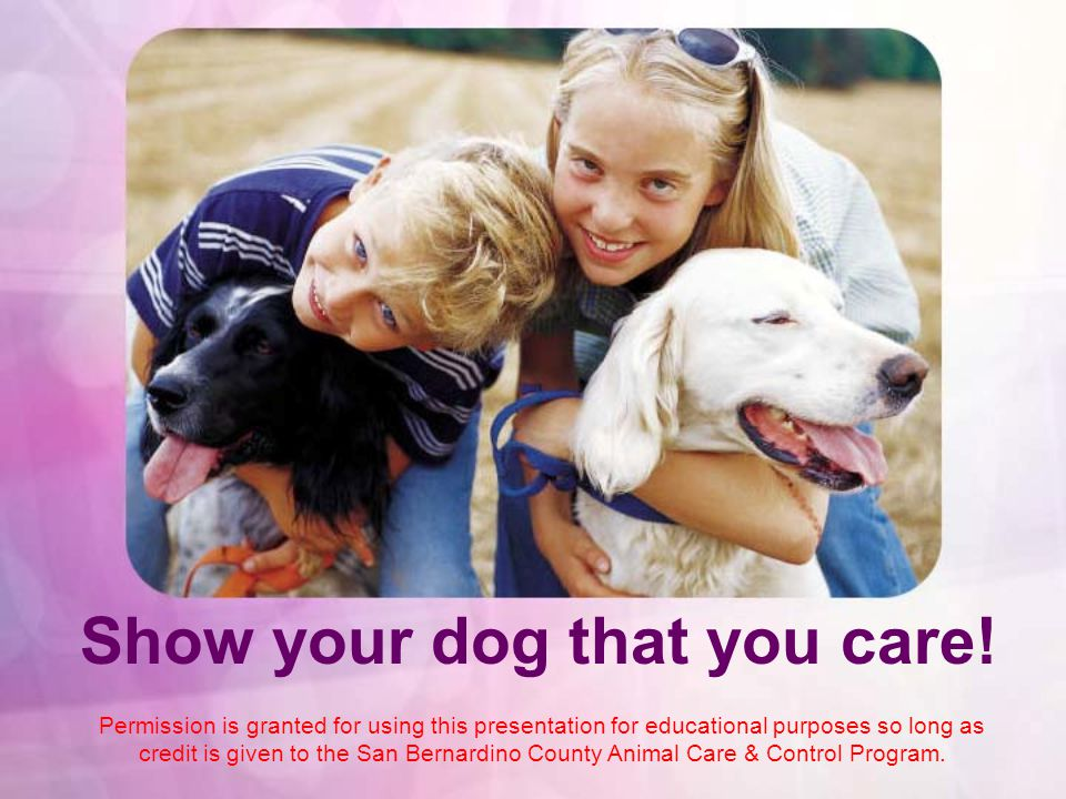Show your dog that you care! Permission is granted for using this presentation for educational purposes so long as credit is given to the San Bernardi