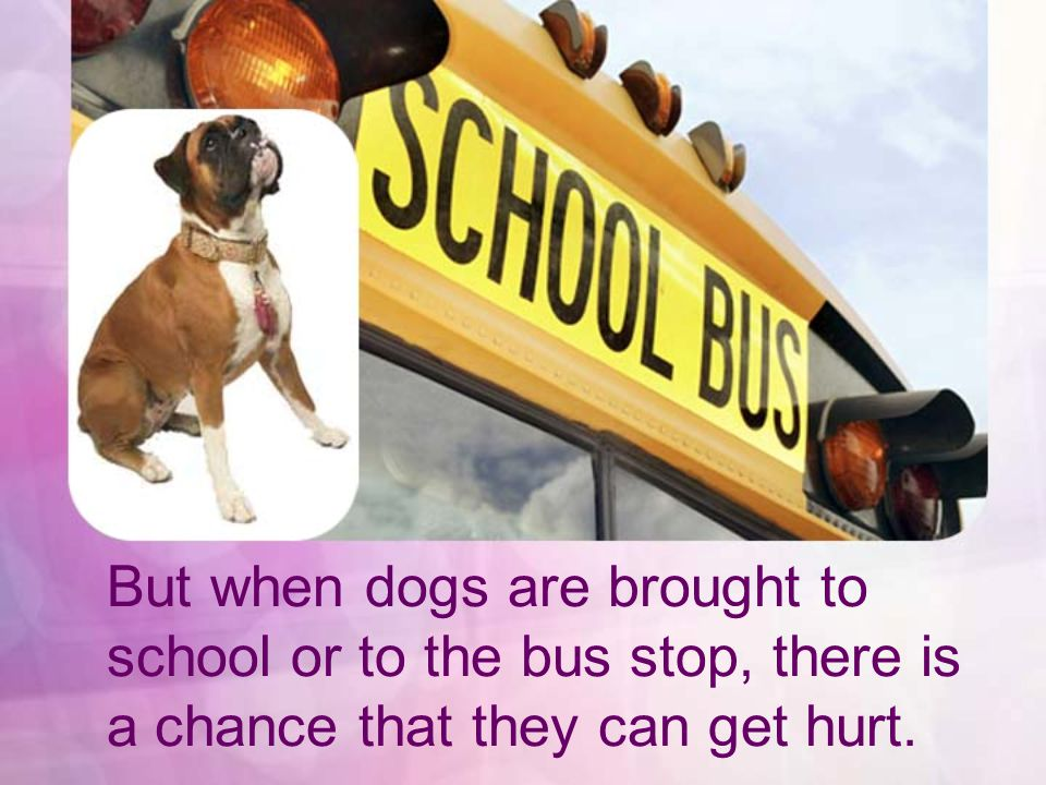 It is also a good idea to leave him at home while you are at school.