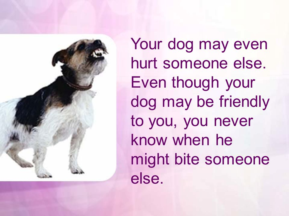 Even the friendliest dogs have been known to bite.