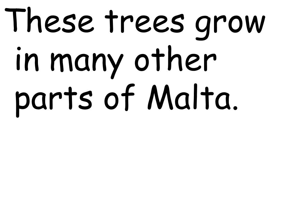 These trees grow in many other parts of Malta.