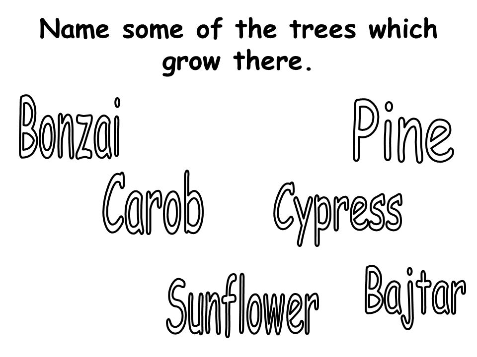 Name some of the trees which grow there.