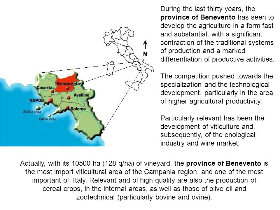 During the last thirty years, the province of Benevento has seen to develop the agriculture in a form fast and substantial, with a significant contraction of the traditional systems of production and a marked differentiation of productive activities.
