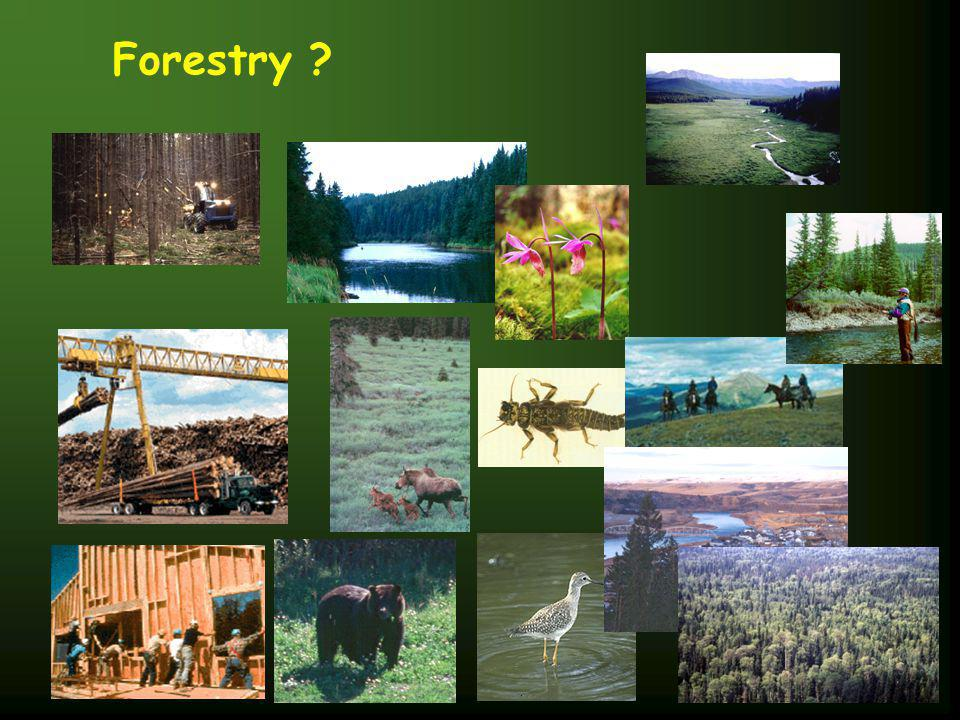 Role of a Forester ?