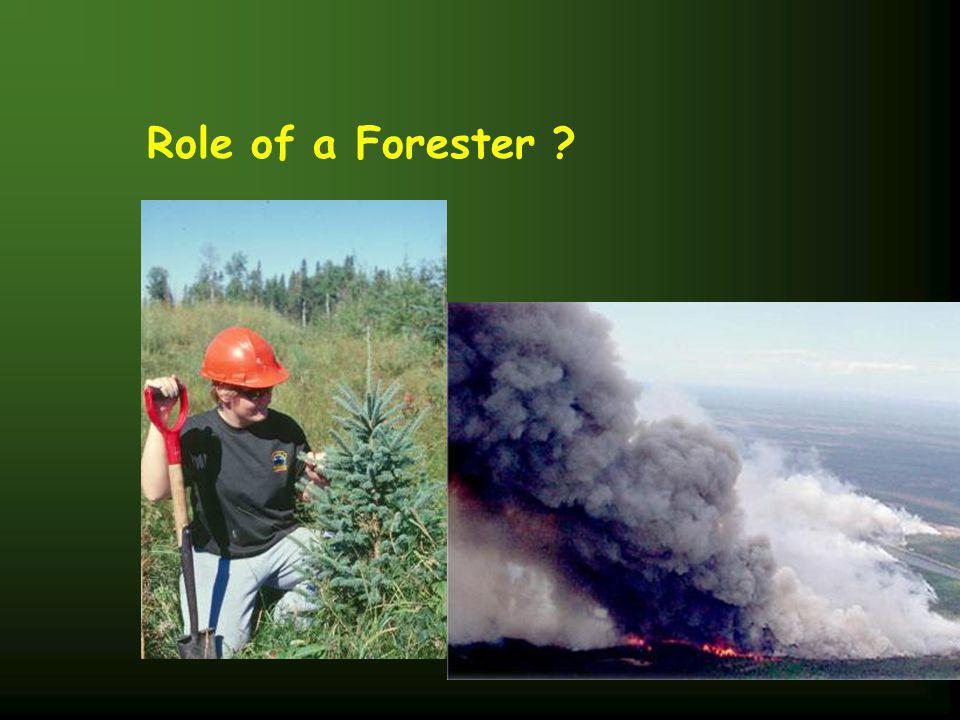 Role of a Forester