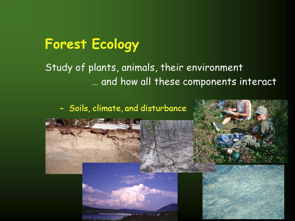 Forest Ecology Study of plants, animals, their environment … and how all these components interact –Soils, climate, and disturbance
