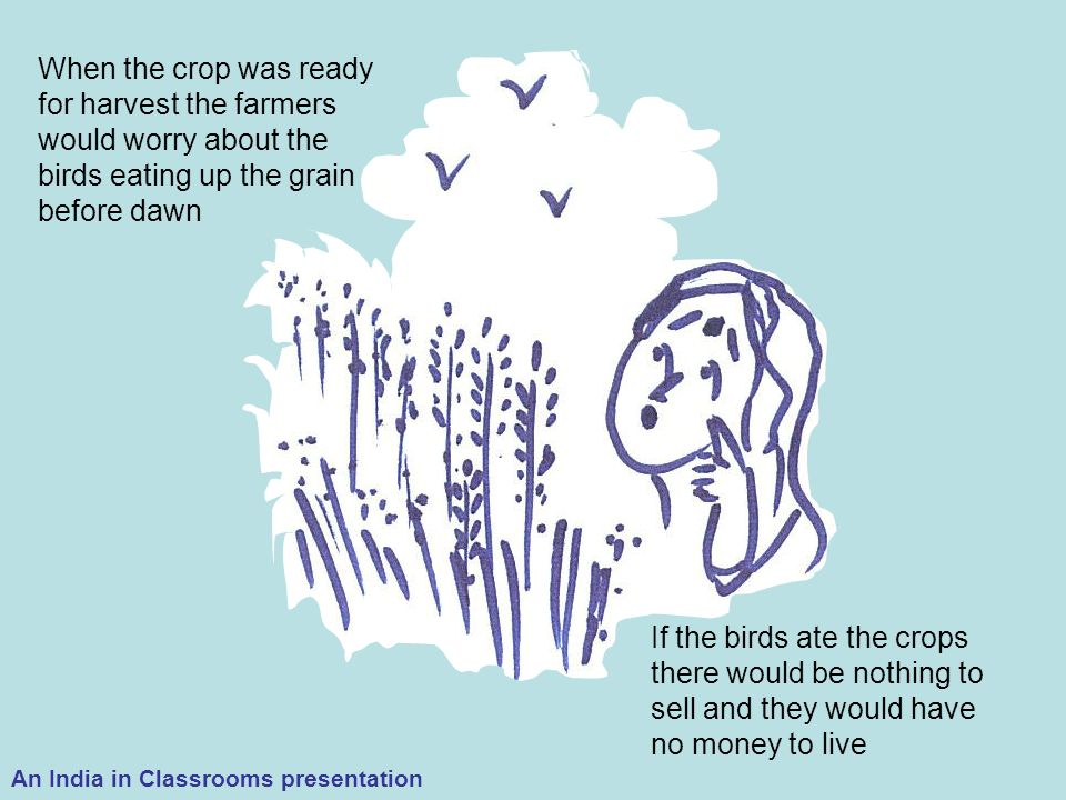 When the crop was ready for harvest the farmers would worry about the birds eating up the grain before dawn If the birds ate the crops there would be