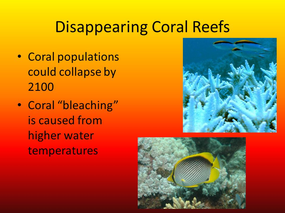 Disappearing Coral Reefs Coral populations could collapse by 2100 Coral bleaching is caused from higher water temperatures