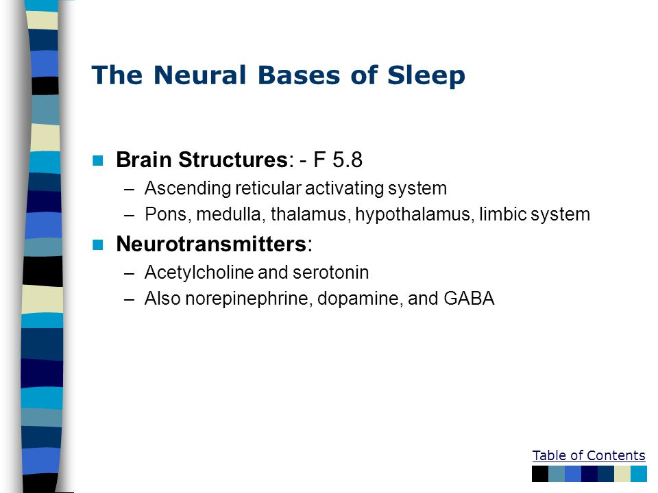 Table of Contents The Neural Bases of Sleep Brain Structures: - F 5.8 –Ascending reticular activating system –Pons, medulla, thalamus, hypothalamus, l