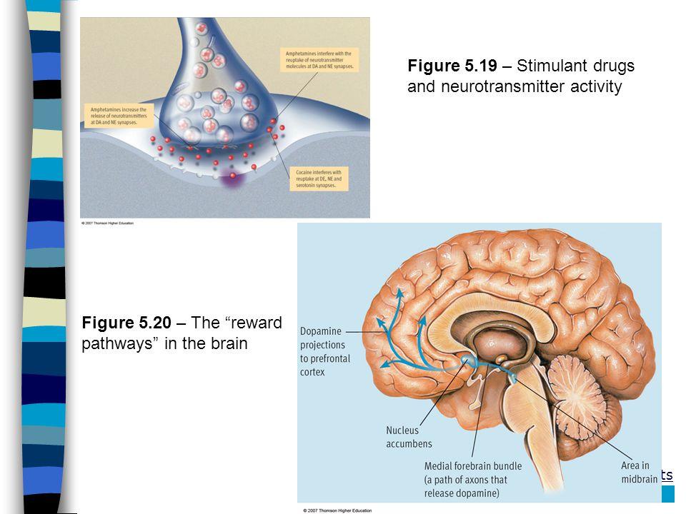 Figure 5.19 – Stimulant drugs and neurotransmitter activity Figure 5.20 – The reward pathways in the brain