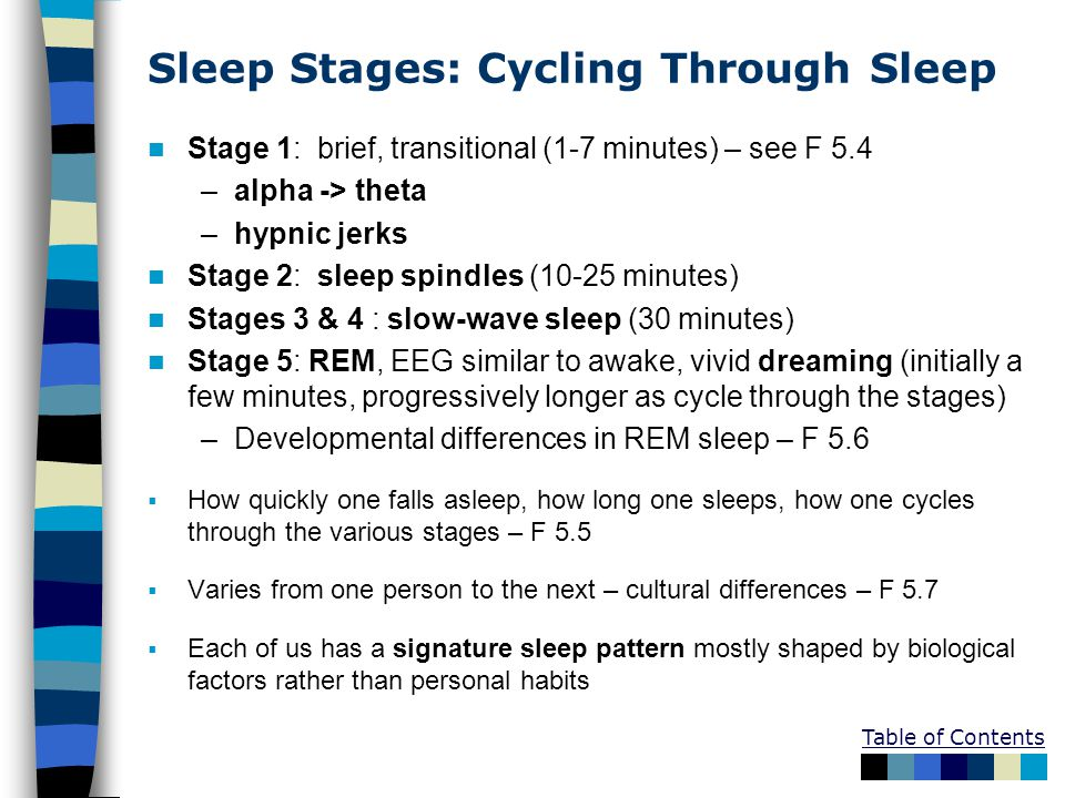 Table of Contents Sleep Stages: Cycling Through Sleep Stage 1: brief, transitional (1-7 minutes) – see F 5.4 –alpha -> theta –hypnic jerks Stage 2: sl