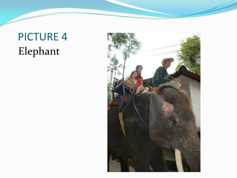 PICTURE 4 Elephant