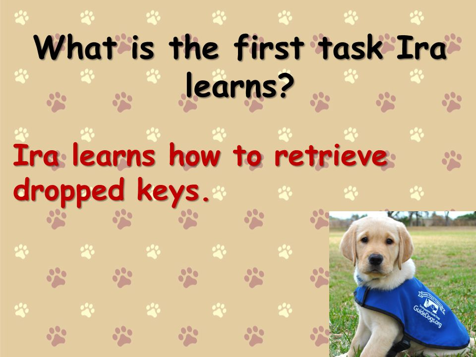 What is the first task Ira learns? Ira learns how to retrieve dropped keys.