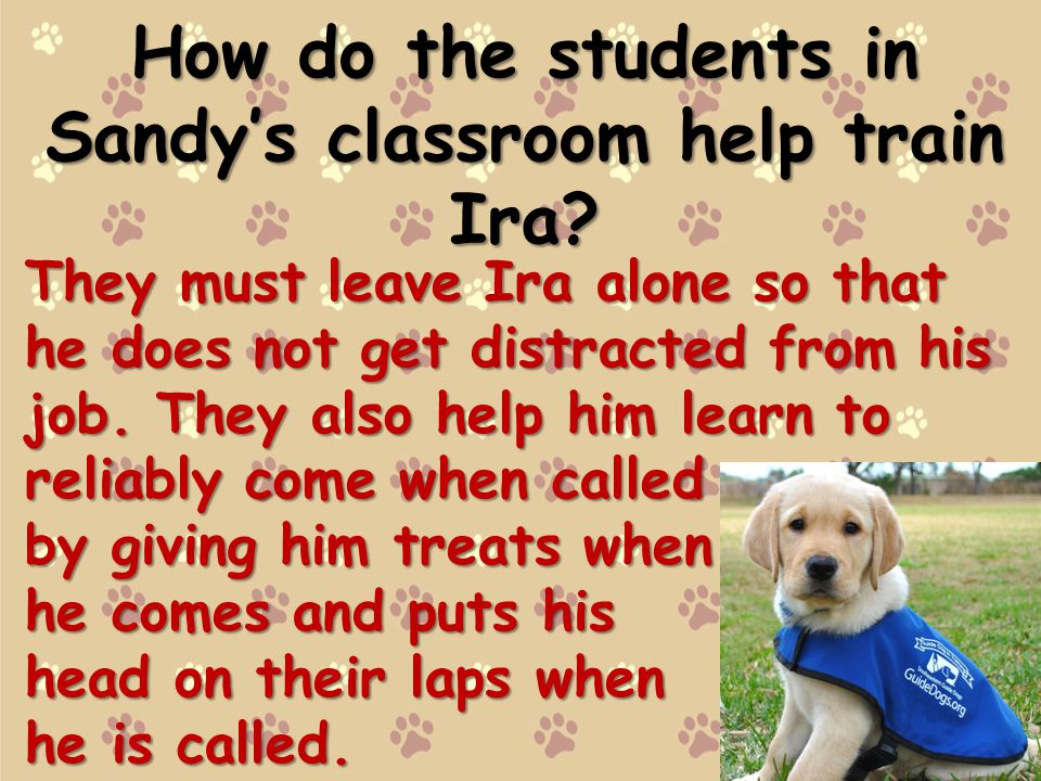 How do the students in Sandys classroom help train Ira.